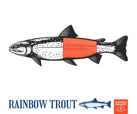 Vector rainbow trout fish illustration for label or packaging design