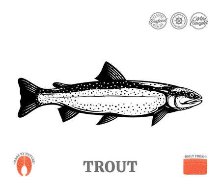 Vector trout fish illustration isolated on a white background. Trout raw steak and fillet