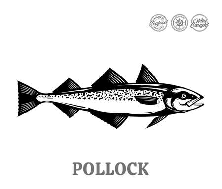 Vector pollock fish illustration isolated on a white background Иллюстрация
