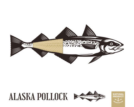 Vector Alaska pollock fish illustration isolated on white background Иллюстрация