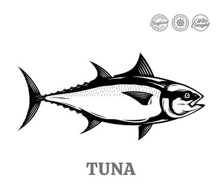 Vector tuna fish illustration isolated on a white background Векторная Иллюстрация