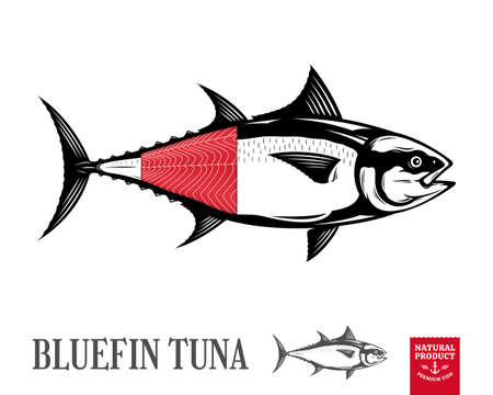 Vector bluefin tuna fish illustration isolated on white background