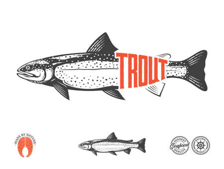 Vector rainbow trout flat style label isolated on a white background. Trout raw steak and fish illustration 矢量图像