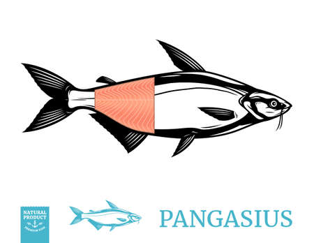 Vector pangasius fish illustration with fillet isolated on a white background 矢量图像