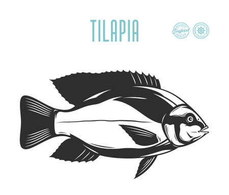 Vector tilapia fish illustration isolated on a white background