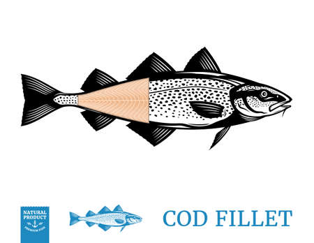 Vector cod fish illustration with fillet isolated on a white background