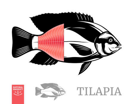Vector tilapia fish illustration with fillet isolated on a white background