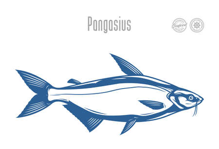 Vector pangasius fish illustration isolated on a white background 矢量图像