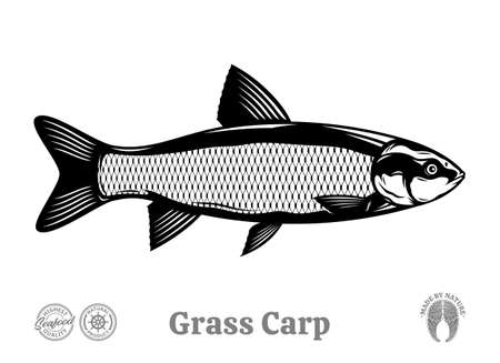 Vector grass carp illustration isolated on a white background