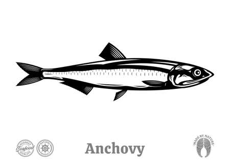 Vector anchovy fish illustration isolated on a white background