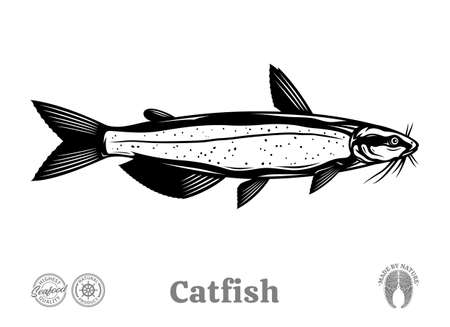 Vector catfish illustration isolated on a white background