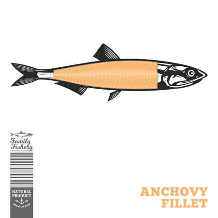 Vector anchovy fish illustration with fillet part