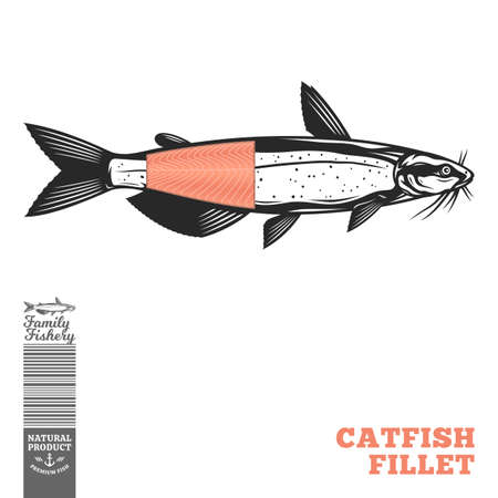 Vector channel catfish fish illustration with fillet part