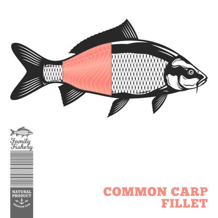 Vector common carp fish illustration with fillet part