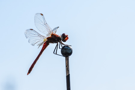 Macro shot of a dragonfly perched on a stick