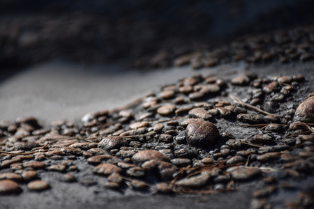 Macro view of small brown pebbles on a rock, with dry pine needles lying around
