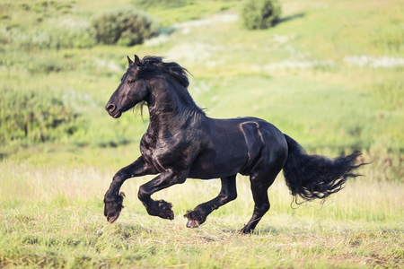 forward: Nice horse galloping