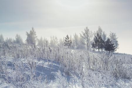 Winter forest at morning Reklamní fotografie