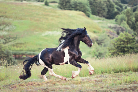 Nice horse galloping