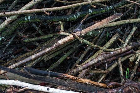 brushwood: Brushwood Texture Stock Photo