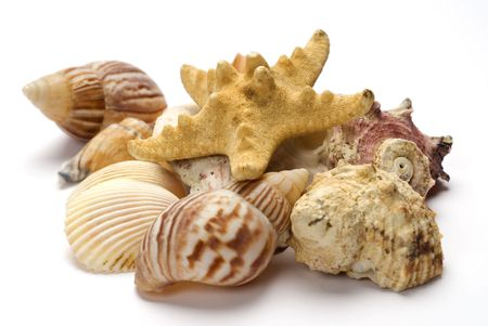 Grouping of shells with starfish photo