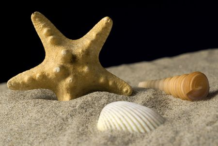 grouping: Grouping of shells with starfish