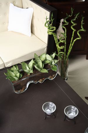 Sansevieria in the room