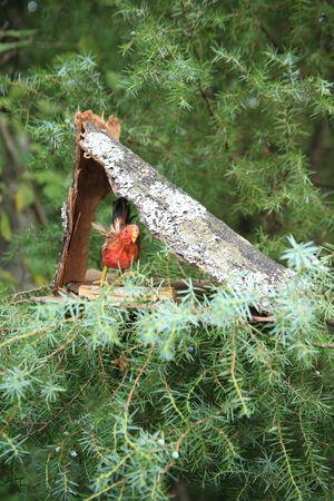 Bird house 2 Stock Photo