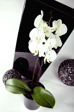 White orchid 3