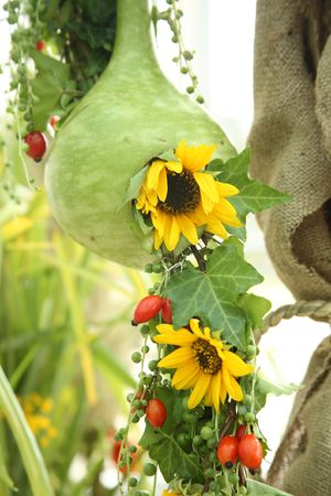 Nest of the pumpkin for sunflower Stock Photo - 5877481