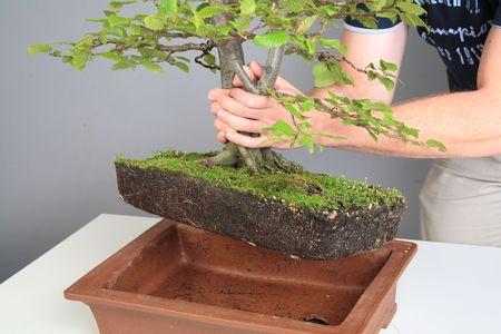How to make bonsai 4