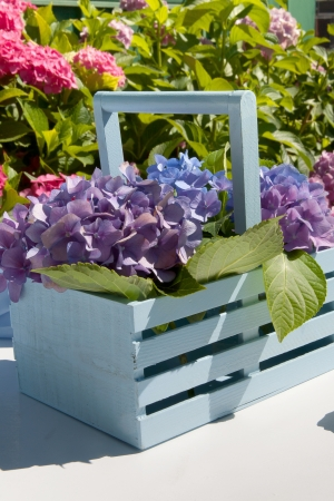 Hydrangea garden detail Stock Photo - 17587573