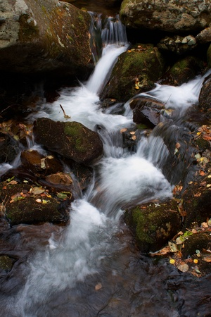 Close up autumn stream in forest photo