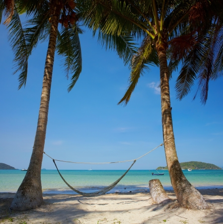Tropic sea coast with palms and hammock Stock Photo - 17104143