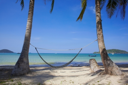 Tropic sea coast with palms and hammock photo