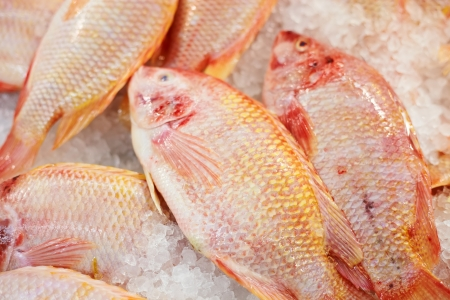 Close up fishes in the ice on market photo