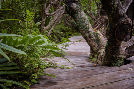 implanted: Asia place implanted in nature witth natural wood and flora