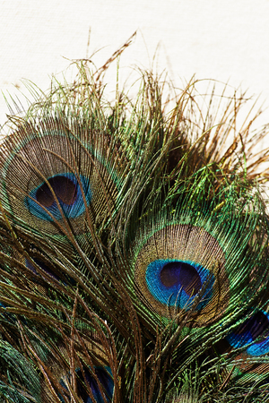 Cllose up peacock feather textured effect