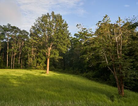 Natural landscape with traditionl look forest, meadow and blue sky under evening sunlight