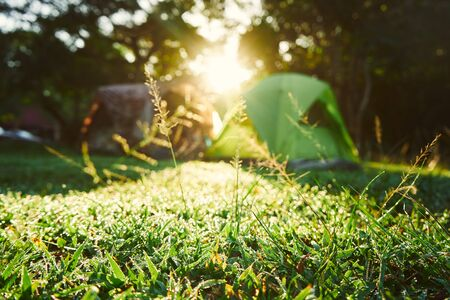 Camping tent at the background with morning sunlight and green grass