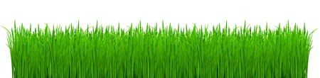 A fragment of a thicket of young green grass on white background