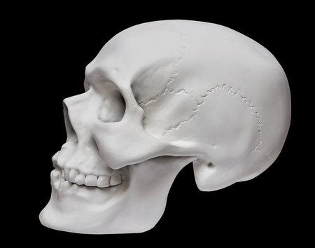 Human skull on black background. Anatomical model in plaster