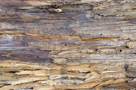 A fragment of an old rotten board as an abstract background Stock Photo