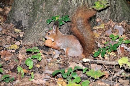 alexandria:  Protein nibbles walnut Alexandria Park