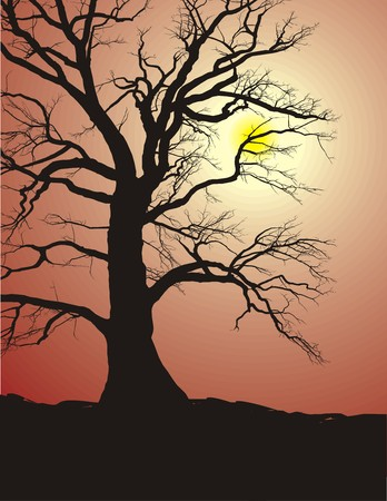 Silhouette of an old tree, oak, in sunset and, vector graphics