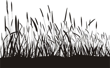 grass vector: Black blade of grass, isolated on a white background, vector illustration