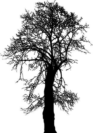 Árbol de Linden