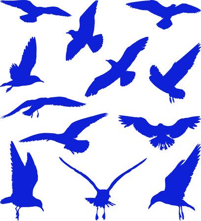 Bleus silhouettes de mouettes sur le fond blanc