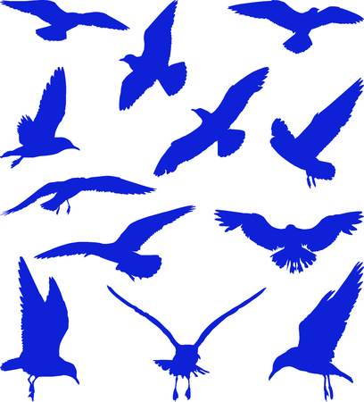 Blue silhouettes of seagulls on the white background Vector