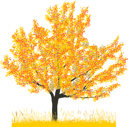 Vector illustration of cherry tree in autumn Stock Vector - 6523015